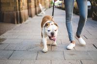 Hundehaufen auf dem Gehweg - Verbraucherfrage der Woche der ERGO Rechtsschutz Leistungs-GmbH
