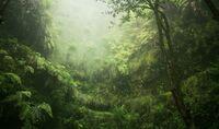 Primärwald muss erhalten bleiben