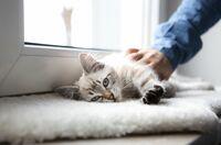 Corona-Tests für Hund und Katze