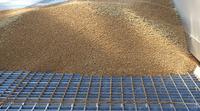 Unterschiedliche Erntebilanz 2020 der AGRAVIS Raiffeisen AG
