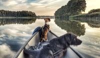 Verreisen mit Hund: Reise-Experten geben Tipps für die Urlaubsplanung mit Vierbeinern