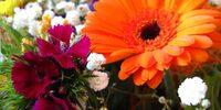 Allergien wie Heuschnupfen mit Augentropfen behandeln