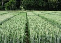 Pflanzenbau: Versuchsergebnisse 2020 der AGRAVIS Raiffeisen AG