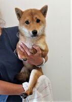 Grausam: Hund ohne Pfoten ausgesetzt