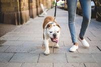 Tipps für frischgebackene Hundeeltern - Verbraucherinformation der ERGO Group