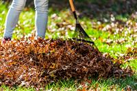 Herbstlaub richtig entsorgen - Verbraucherfrage der Woche der ERGO Rechtsschutz Leistungs-GmbH