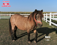 Gut Aiderbichl rettet Pony Maxi