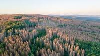 Klimawandel verstärkt Baumsterben und Waldsterben in Deutschland