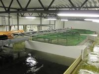 Die Firma DEUTSCHE EDELFISCH baut modernste Aquakultur