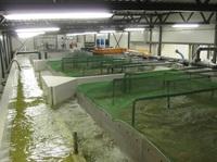 Aquakultur im Binnenland: Die Firma DEUTSCHE EDELFISCH zeigt, wie das geht