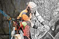 Gesunde Baeume durch Baumpflege. Ohne Risiko fuer ein schoenes Zuhause