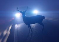 Vorsicht Wildwechsel! - Verbraucherfrage der Woche der ERGO Versicherung