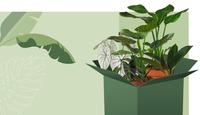 Grüne Quetsch Box: Plantler gibt unvollkommenen Pflanzen eine zweite Chance!