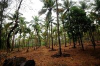 Klar definierte Regeln für die Palmölproduktion