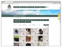 Hilfe und Trost beim Tod eines Haustieres, auch in Corona Zeiten