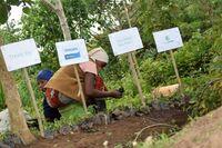 Philips Monitore stehen für Nachhaltigkeit: Wiederaufforstungs-Kampagne in Partnerschaft mit ForestNation