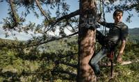 Mit Datenanalysen gegen die Abholzung des Regenwaldes