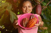 Zertifizierungsstandards beim Kakaoanbau