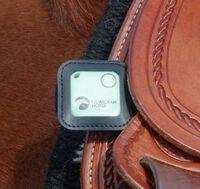Produkttest Guardian Horse GPS Tracker auf www.mit-Pferden-reisen.de