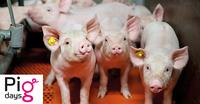 AGRAVIS Raiffeisen AG: Online-Seminare Pigdays starten