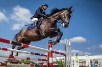 IBsolution unterstützt Digitalisierung in der Pferdezucht
