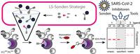 Effektivere Screening-Methode verbessert Identifikation von Wirkstoffen gegen Viren