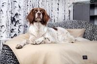 NEUE - Hundedecken, eine Wohltat für unsere Hunde!