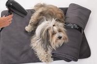 Allergie beim Hund? - was hilft kurzfristig?