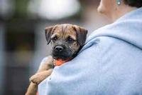 Welpenboom und Hundeschulen im Lockdown