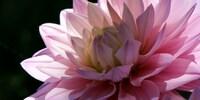 Vor der Pollensaison: Allergien mit Augentropfen vorbeugen