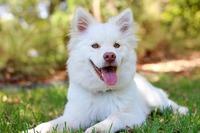 Dein Hund macht Dich glücklich    Dein Hund macht Dich glücklich