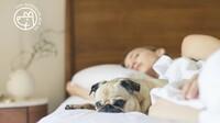 Wellnesshotel Bayern mit Hund: Große Auswahl bei top-hundeurlaub.de