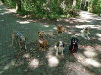 Online Hundeschule Witten ist sehr erfolgreich gestartet
