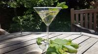 Stachelbeer Sprizz: Perfekter Drink zum Saisonstart