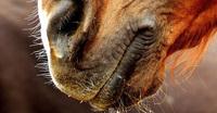 AGRAVIS-Tipps zur Vorbeugung des Herpesvirus bei Pferden