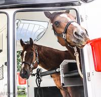 Mit-Pferden-reisen.de informiert: Pferdetransport-Versicherungen
