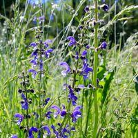Die Nektarweide: Blühendes Highlight nicht nur für Bienen