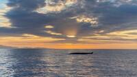 Wale zieht es zum Capo Sant