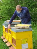 Etiket Schiller begrüßt vier Bienenvölker auf Firmengelände