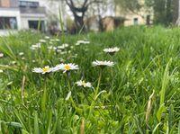 Bienenretter Wildblumenwiesen