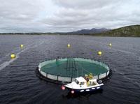 IMPAQT startet Schulungen zu intelligenten Management-Tools für Aquakultursysteme