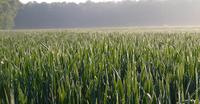 AGRAVIS-Experte Bernhard Chilla prognostiziert die Getreideernte 2021