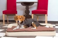 Werksverkauf von Hundebetten Marke DoggyBed am 3. Juli 2021