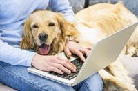 Gewisse Kosten für das Haustier erkennt das Finanzamt an