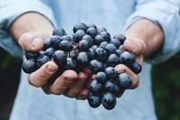 LagenCup - die 10 besten Rotweine Deutschlands