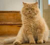 Katzendiät - runter mit den Kilos