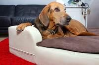 Gesunde Hundekissen - HD bei Hunden jetzt vorbeugen!