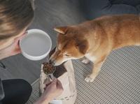 Insekten im Hunde-Futternapf - eine Tierärztin räumt mit vier Missverständnissen auf