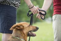 Scheidung: Wer bekommt den Hund? - Verbraucherinformation der ERGO Rechtsschutz Leistungs-GmbH