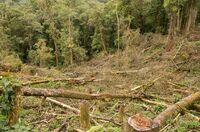 Globale Entwaldung und deutsche Verbraucher